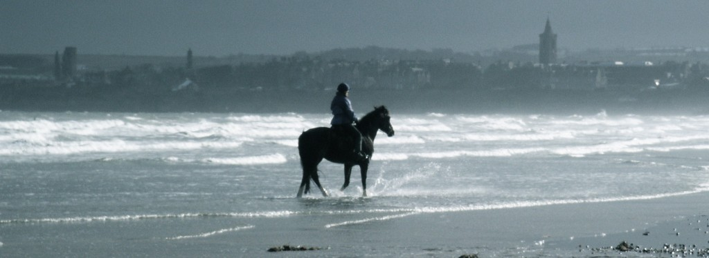 HorseStAndrews2_2